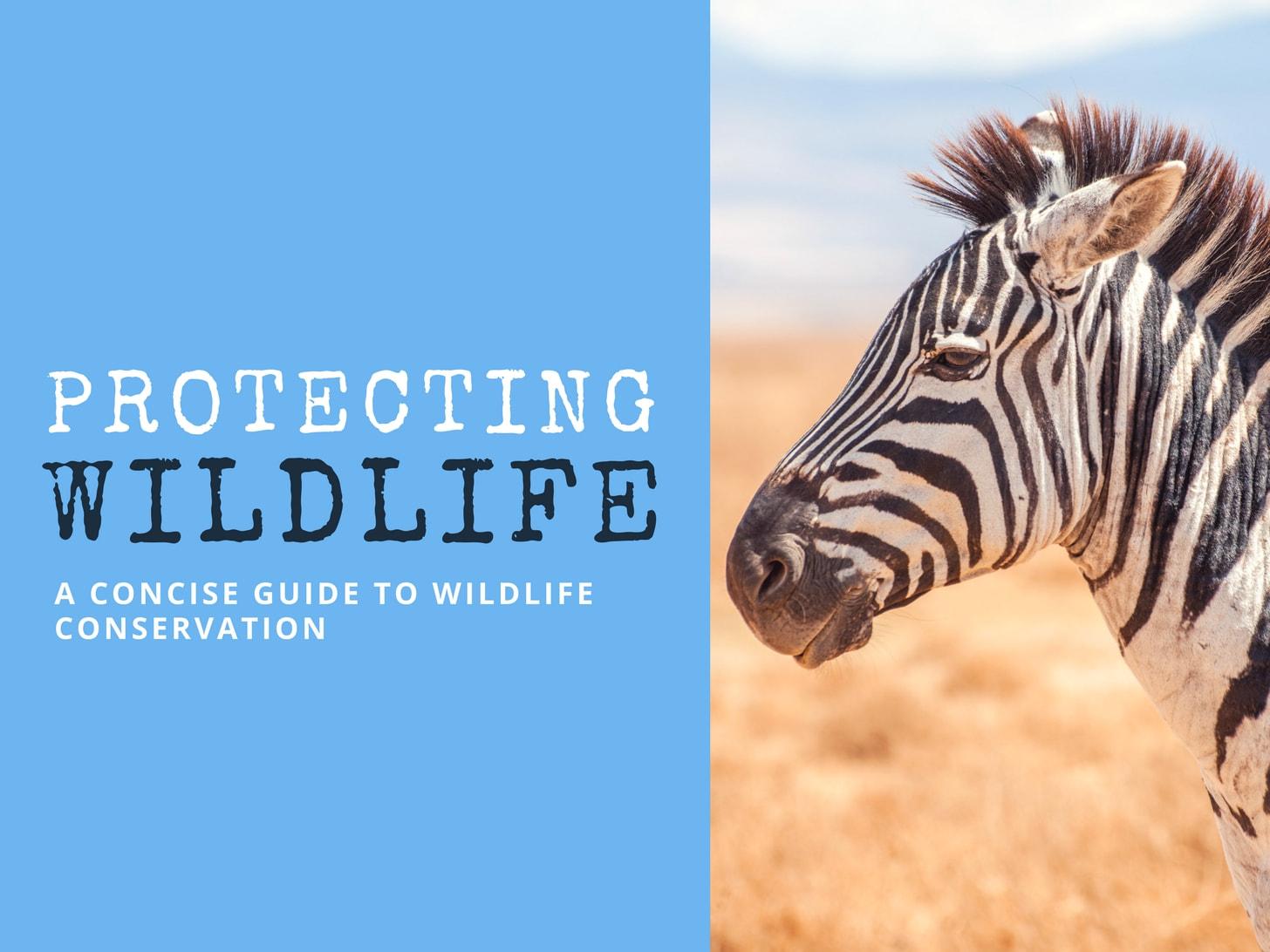 Wildlife Presentation