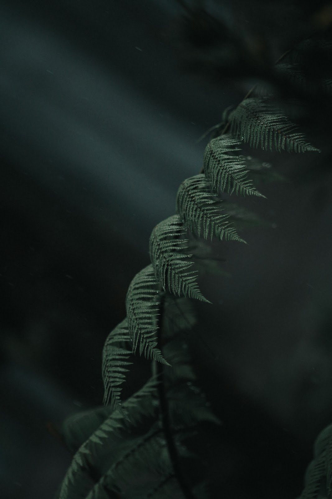 Close up shot of ferns by Ramdan