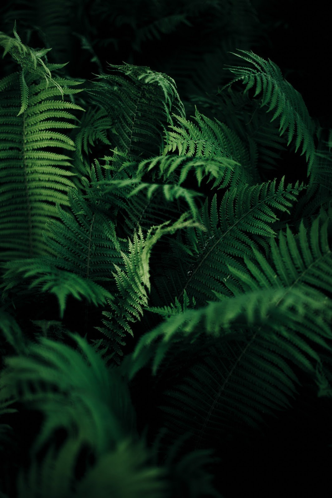 Green ferns by Annie Spratt
