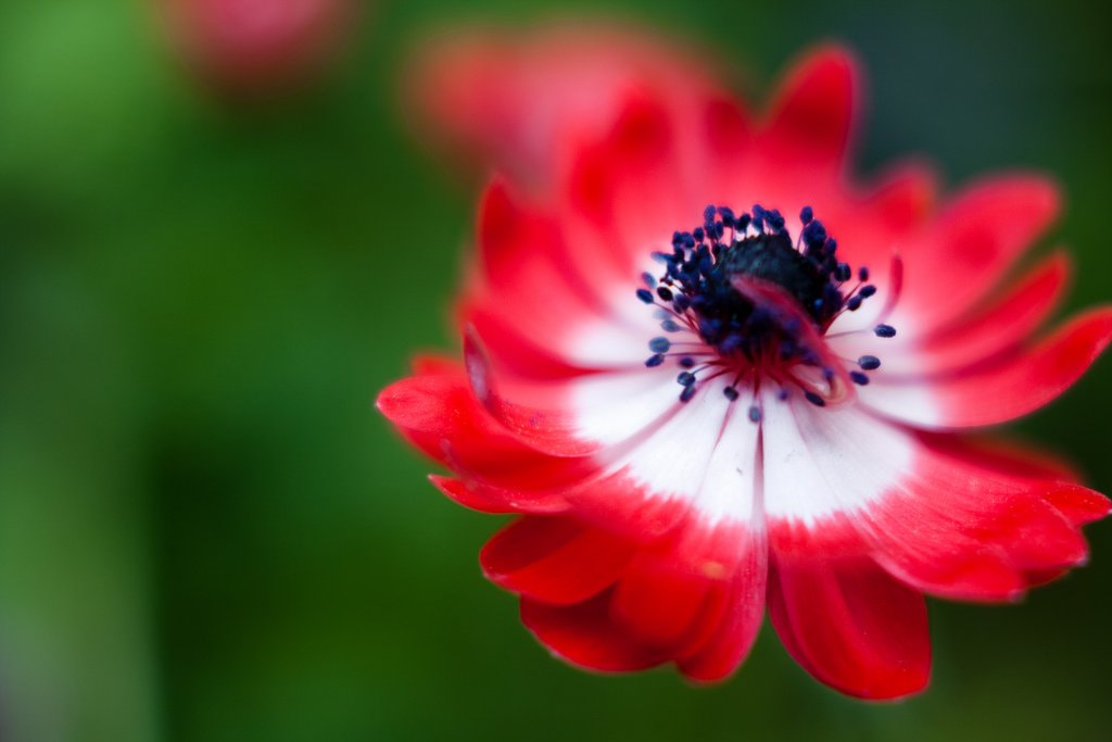 A closeup shot of a flower by Naoto Takai