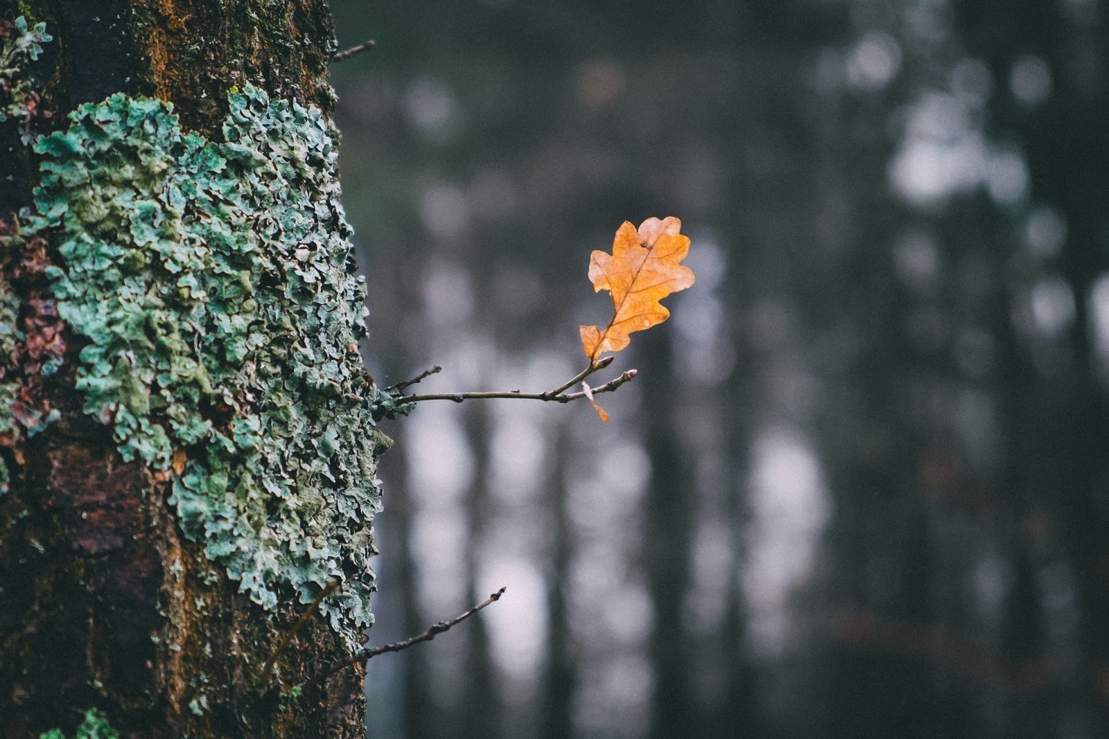 A single leaf photo as an example of depth of field by Benedikt Geyer