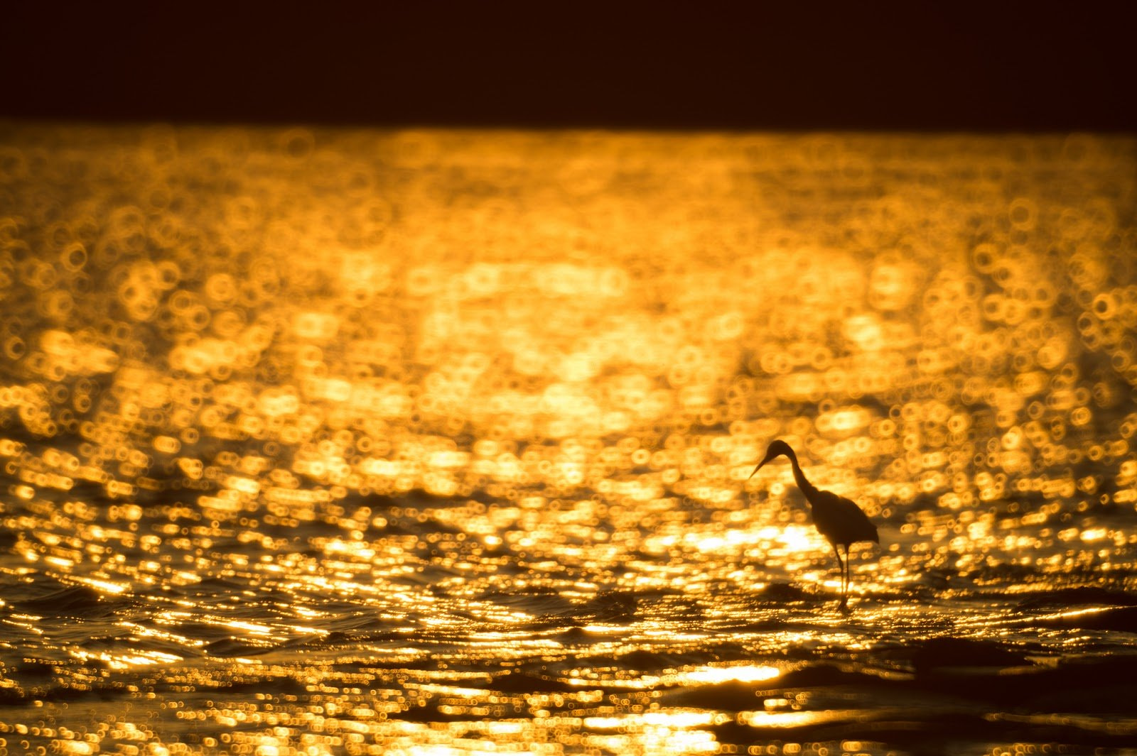 Bokeh photography of golden waters with silhouette of a bird by Takashi Hososhima