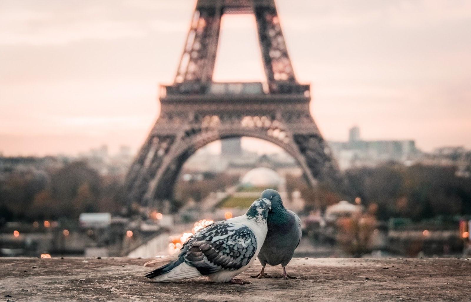 EiffelTowerwithlovebirds