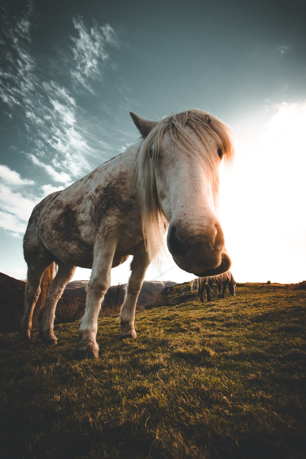 Close up shot of a white and rugged looking horse photo by Jack Finnigan