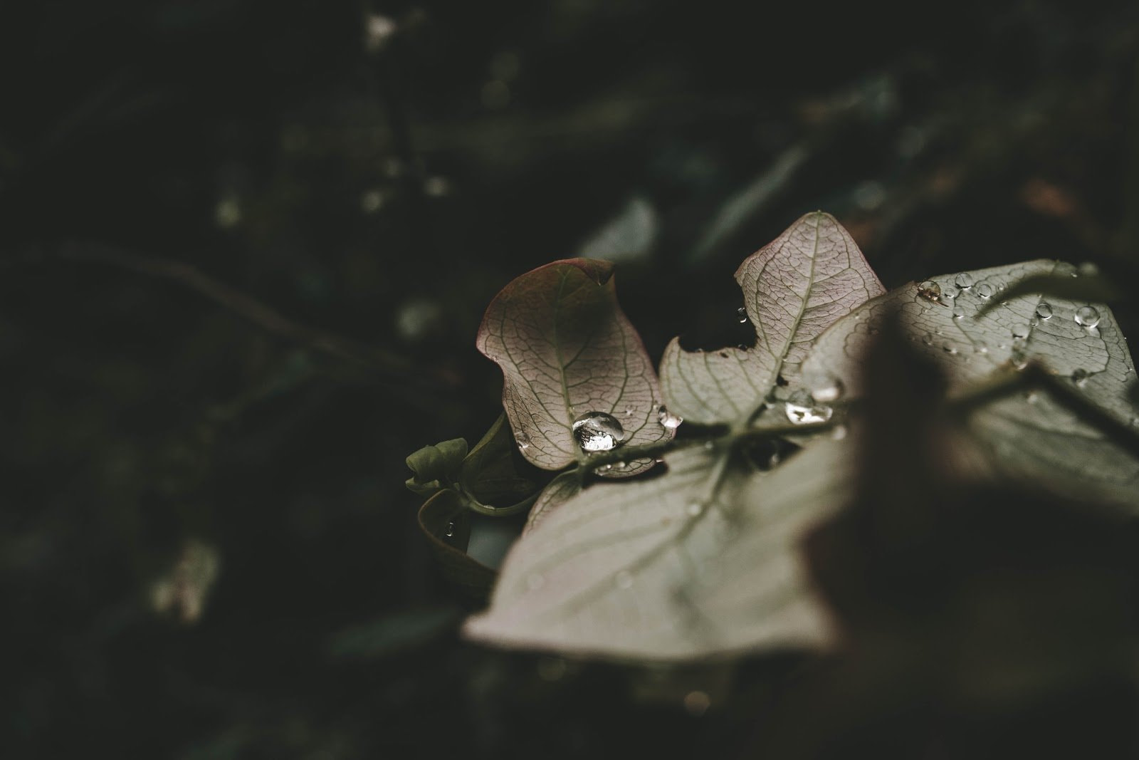 Dried leaves with a bit of water drops photo by Echo Grid